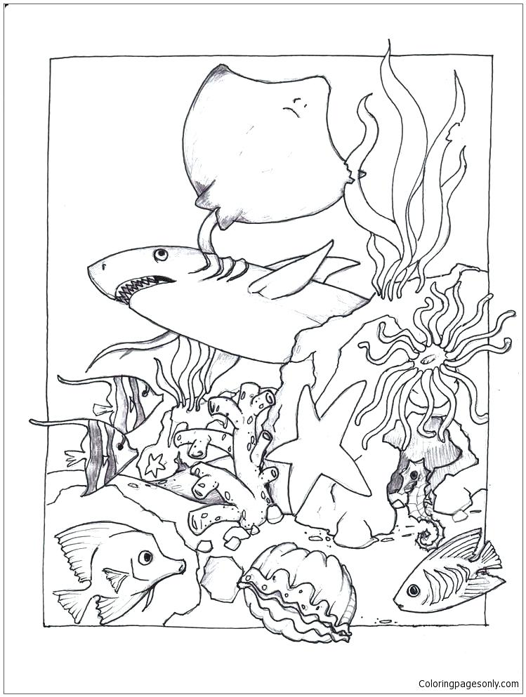 749x993 Marine Coloring Page