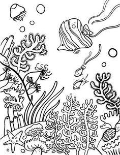236x305 Drawing Underwater Coral Reef Coral Reef