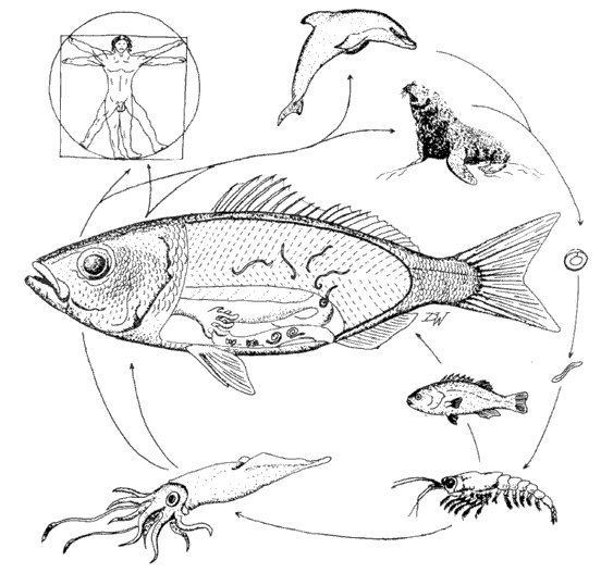 552x527 Ecosystem Relationships