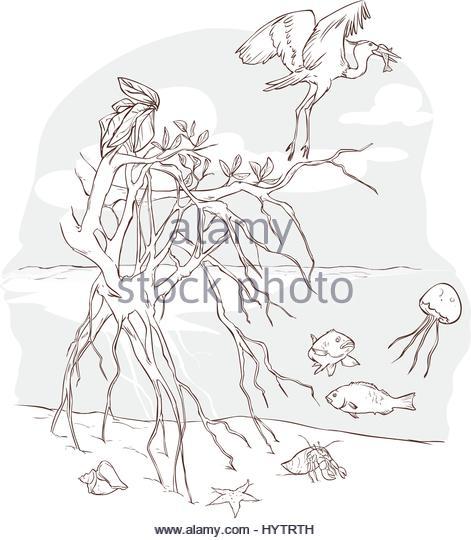 471x540 Marine Ecosystem Stock Vector Images