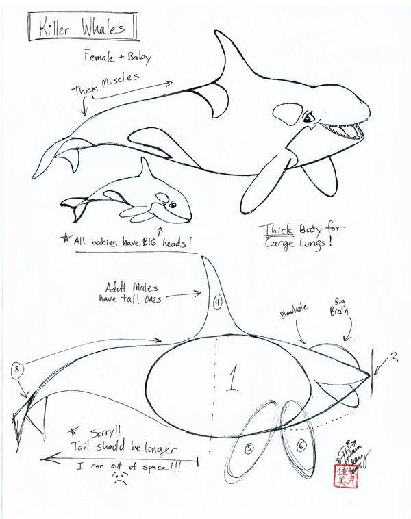 600x758 219 Best Fish Amp Marine Animals Images On To Draw