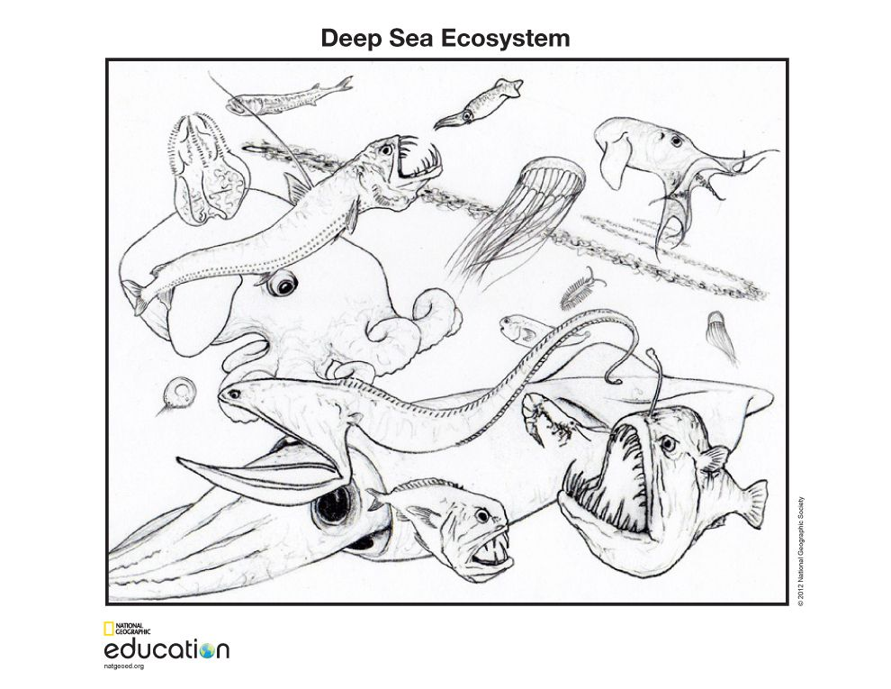 990x765 Deep Sea Ecosystem