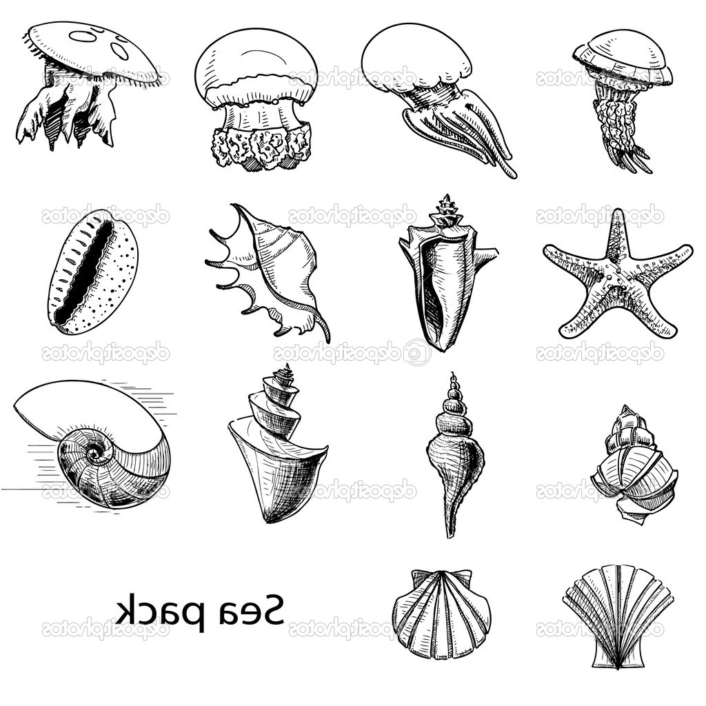 1024x1024 Sketch Of An Ocean Animal Marine Life Drawing Royalty Free