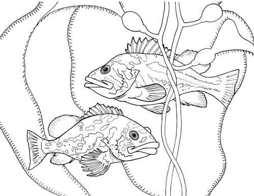 500x386 Finding The True Stars Of The Ocean Marine Life Coloring Book
