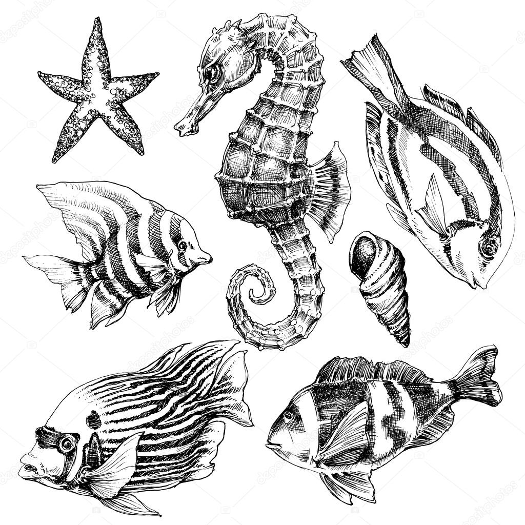 1024x1024 Fish, Sea Horse, Marine Life Hand Drawn Set Stock Vector