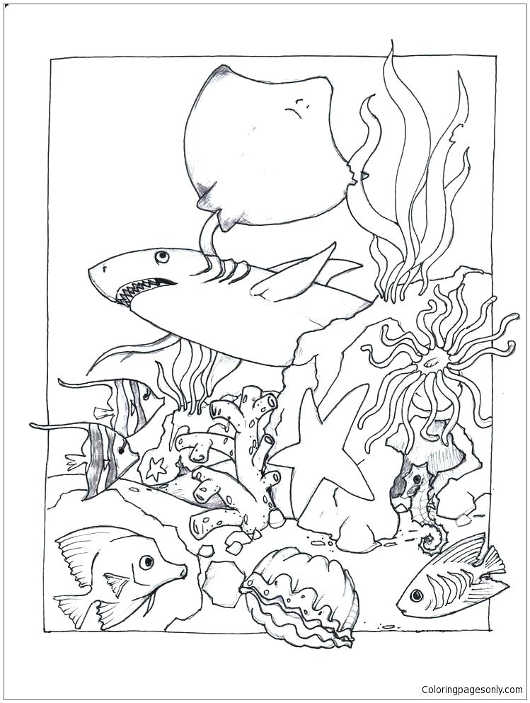 749x993 Marine Coloring Page New Marine Life Coloring Pages Pictures