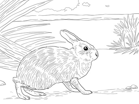 480x360 Marsh Rabbit Coloring Page Free Printable Coloring Pages