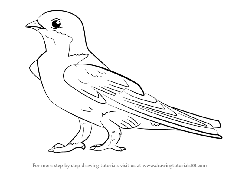 800x565 Learn How To Draw A Common House Martin (Birds) Step By Step