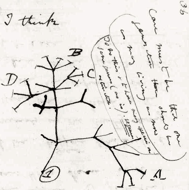 610x612 Evolutionary Trees Gallery About Department Of Mathematics