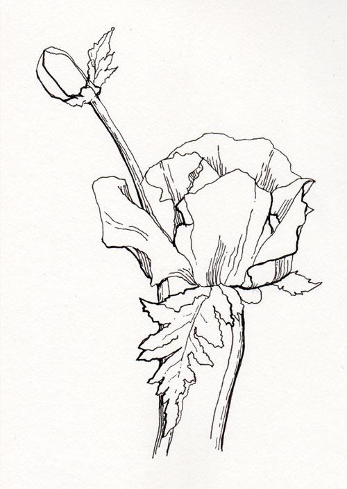 500x704 Pen, Pencil, May 2012