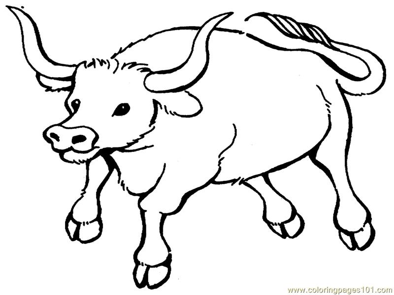 800x600 Bull Coloring Pages