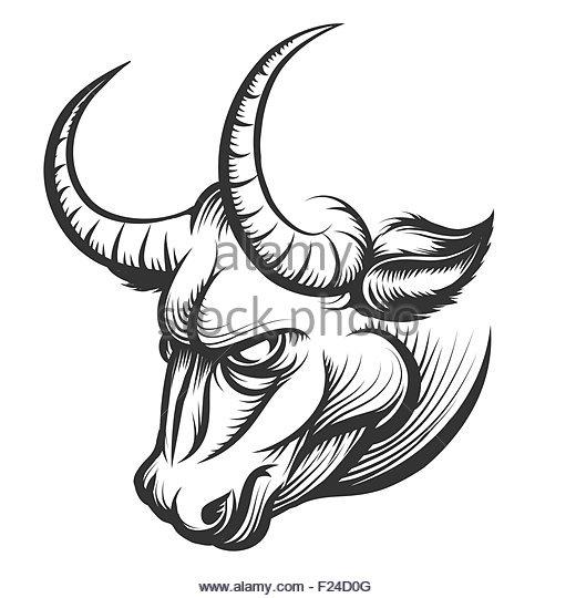 520x540 Drawn Bull Vector
