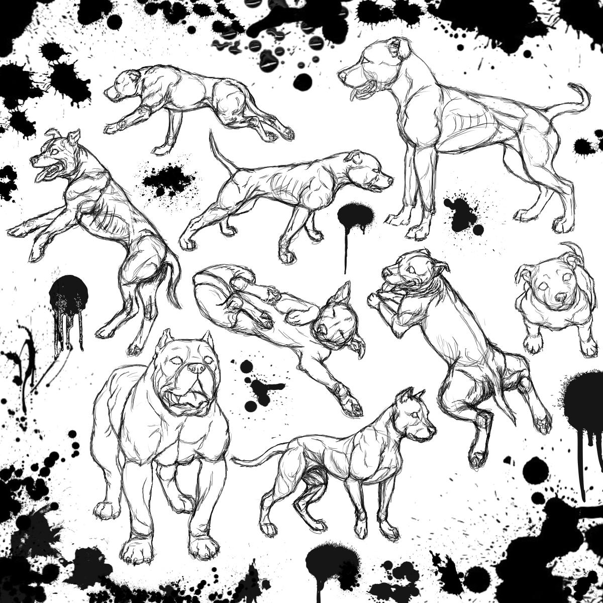 1200x1200 Pit Bull Sketch Dump By Eternusnexxx