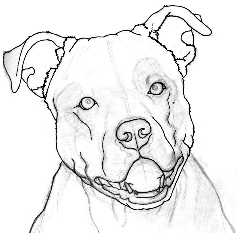 805x788 How To Draw A Pitbull Face