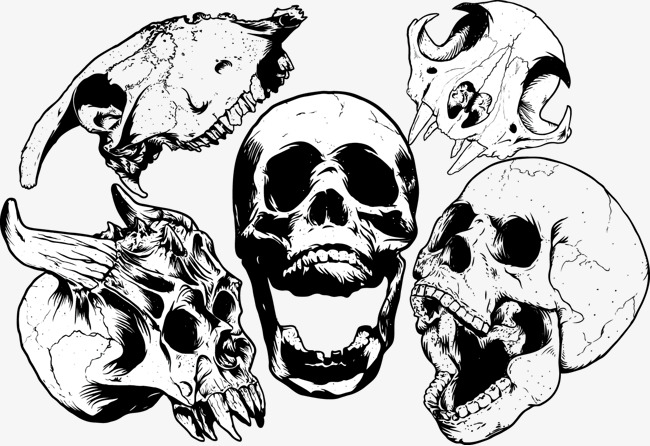 650x446 Vector Skull, Skull, Skull, Vector Free Download Png And Vector