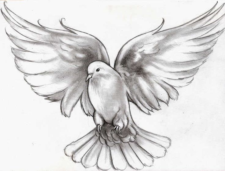 736x560 Dove Tattoo Pictures Flying Dove Tattoo Meaning Animals