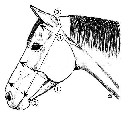 432x416 Diana Thompson Acupressure For Horses