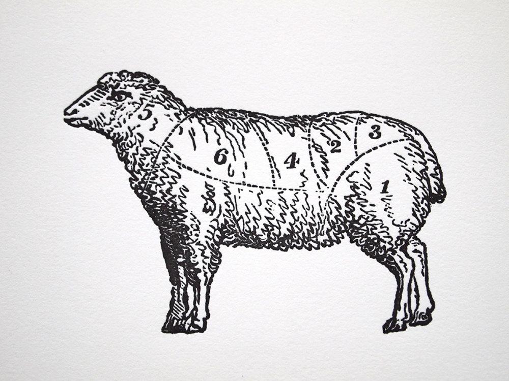 1000x750 Vintage Lamb Drawing