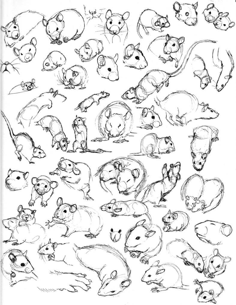 787x1016 Rat Sketch Practice 5 By Never Mor
