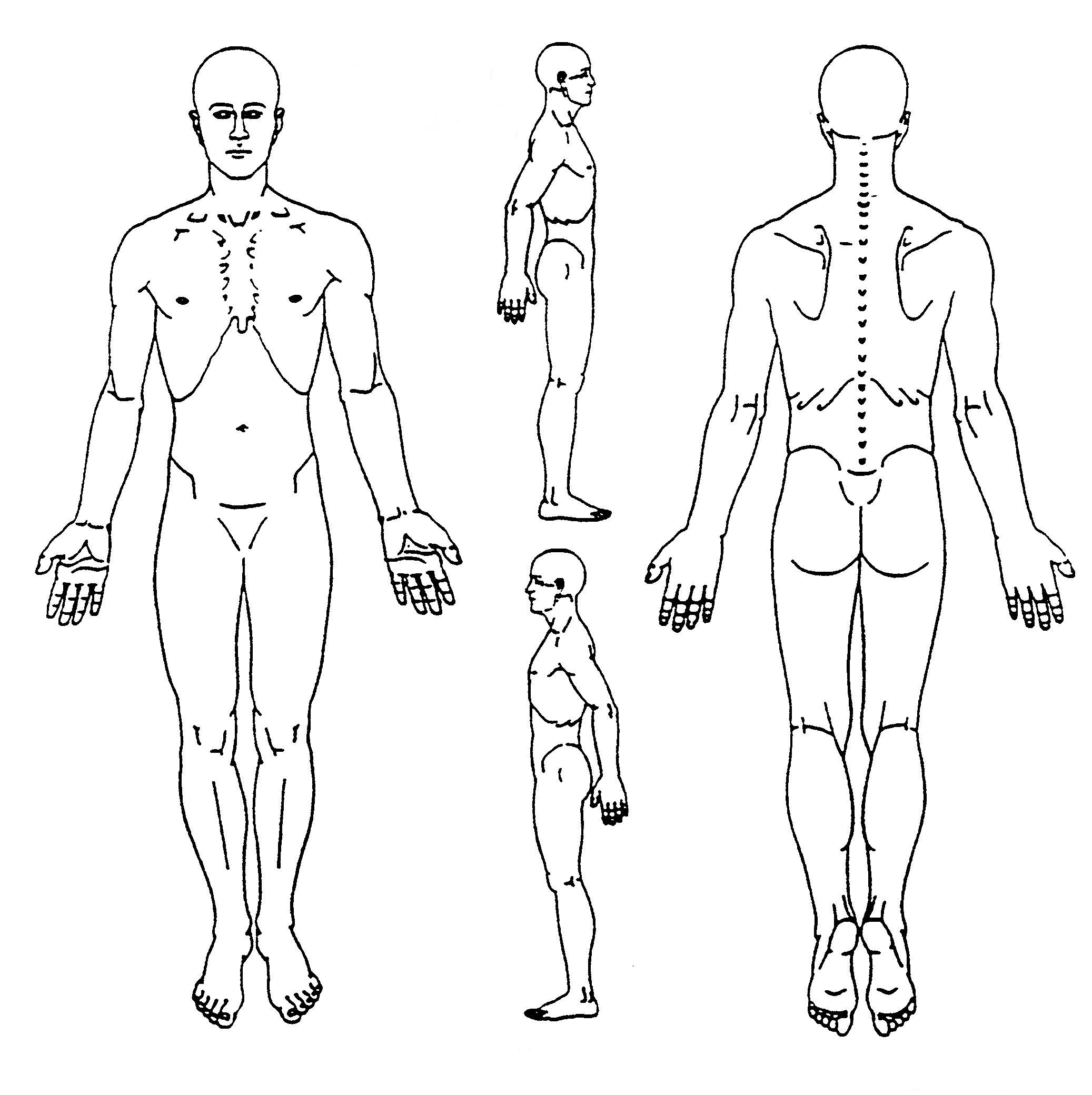 medical body drawing at getdrawings com free for personal use rh getdrawings com drawing free body diagrams worksheet drawing free body diagrams physics classroom answers