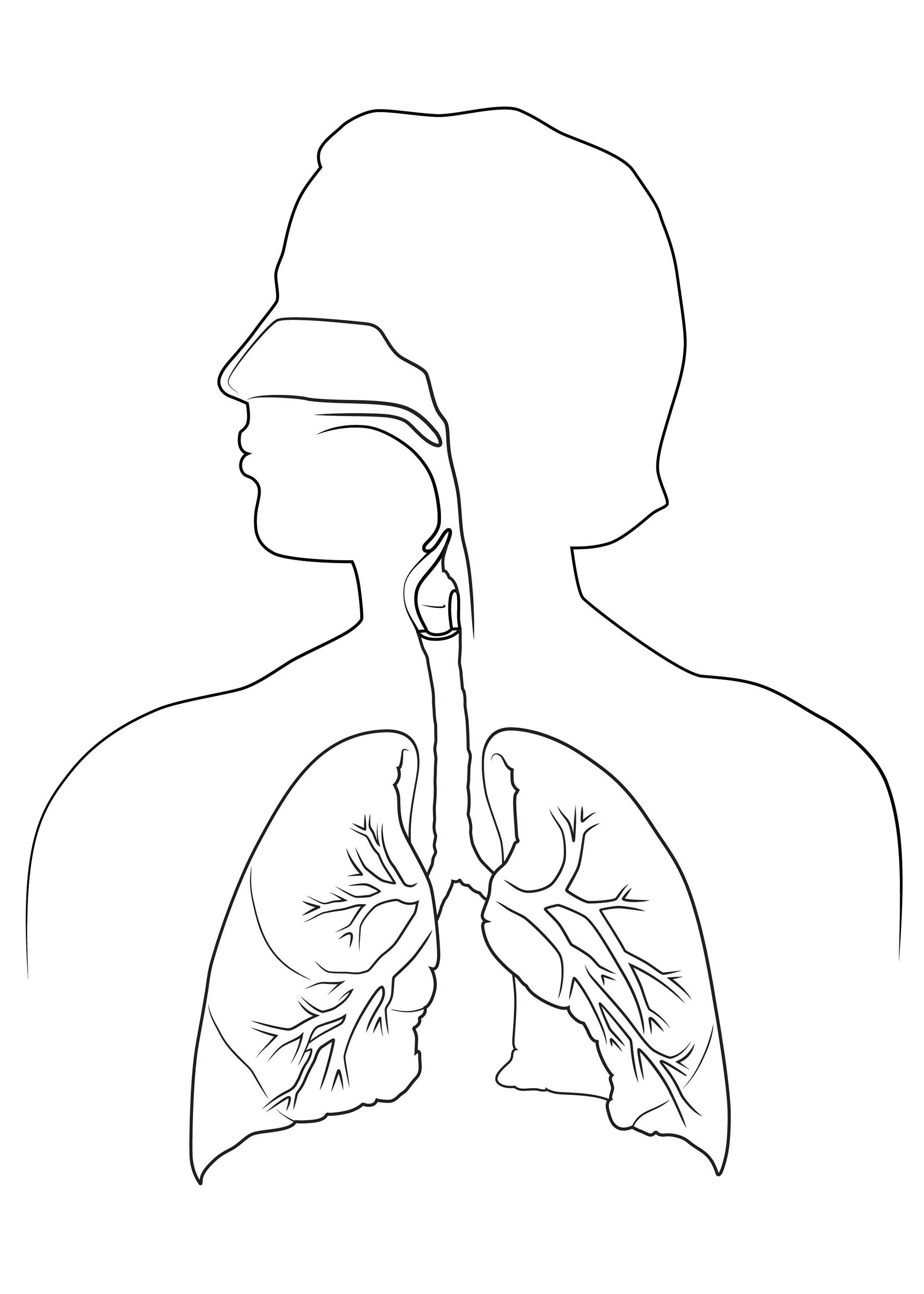 medical body drawing at getdrawings com