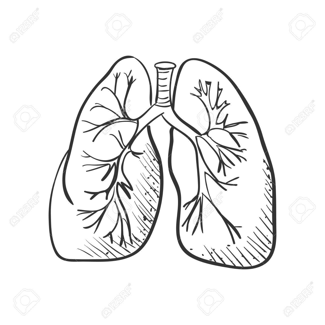 1300x1300 Lungs Doodle Drawing, Medical Background. Excellent Vector