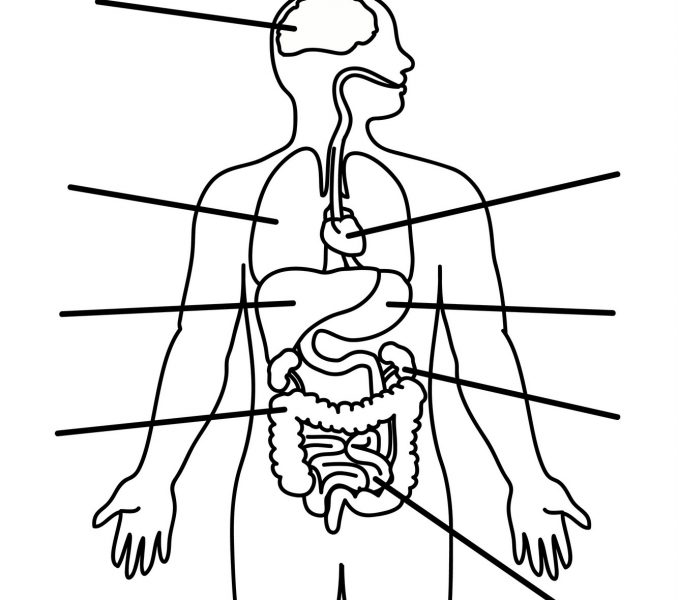 medical human body outline drawing at getdrawings com