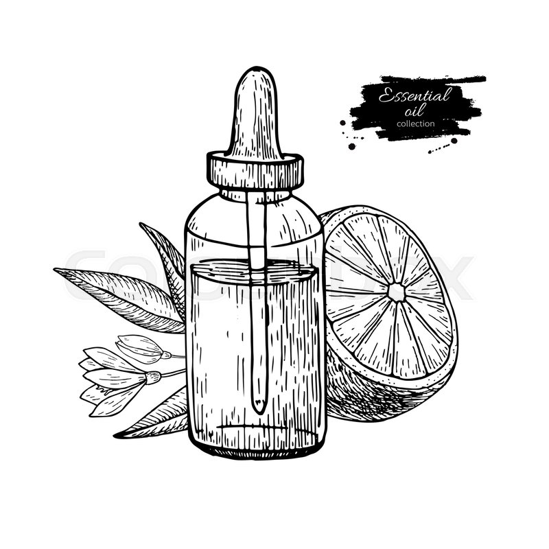 800x800 Lemon Essential Oil Bottle And Lemon Fruit Hand Drawn Vector