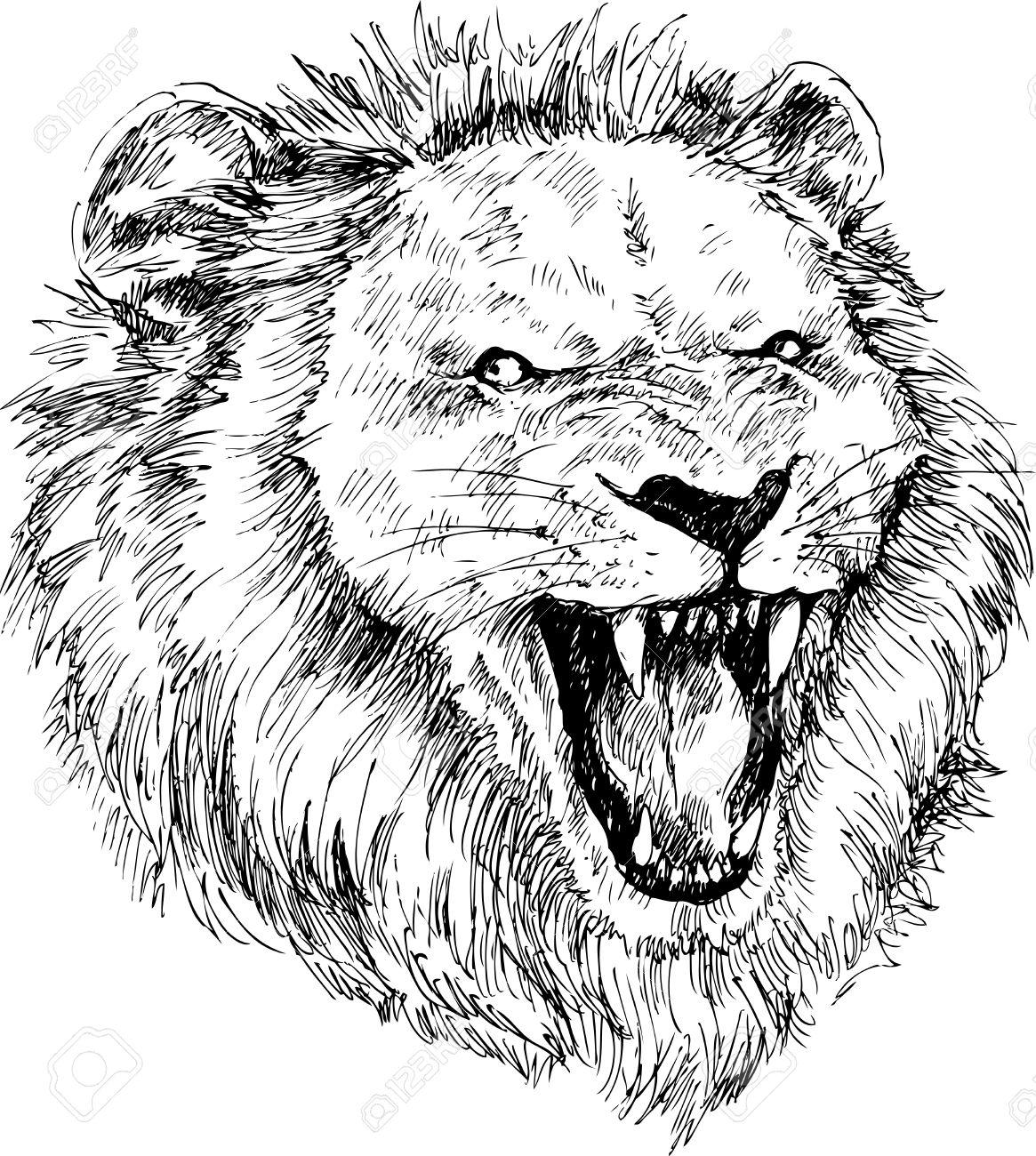 1165x1300 Drawn Head Lion