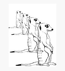 210x230 Meerkat Drawing Photographic Prints Redbubble