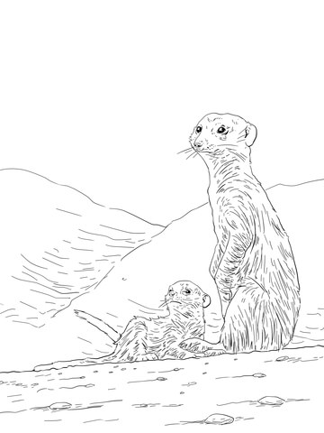 360x480 Meerkat Mother With Pup Coloring Page Free Printable Coloring Pages