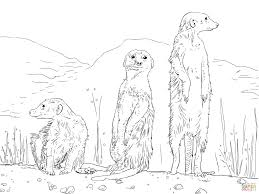 259x194 Image Result For Meerkat Drawing Jim Pyrography