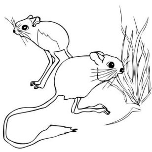 308x308 Photos Of Jerboas Coloring Pages Pictures Groundhogs Print Mice