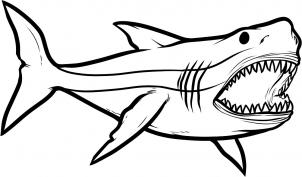 302x177 How To Draw Megalodon, Megalodon Shark, Step By Step, Dinosaurs
