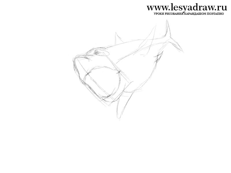 800x600 How To Draw Megalodon's Shark