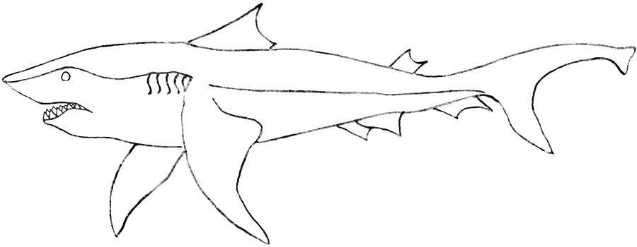 900x350 Megalodon Shark Coloring Pages Shark Coloring Pages Coloring Pages
