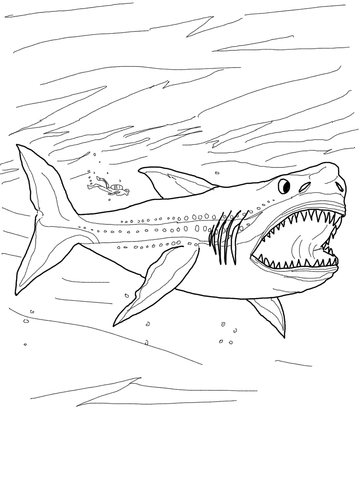 360x480 Megalodon Shark Coloring Page Free Printable Coloring Pages