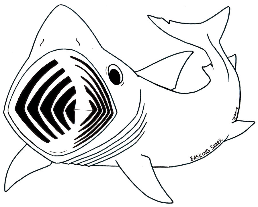 Megalodon Shark Drawing at GetDrawings.com | Free for personal use ...