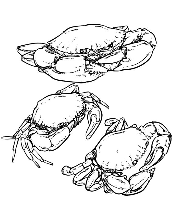 570x713 80% Off Sale Vector Crab Drawing. Hand Drawn Monochrome Seafood