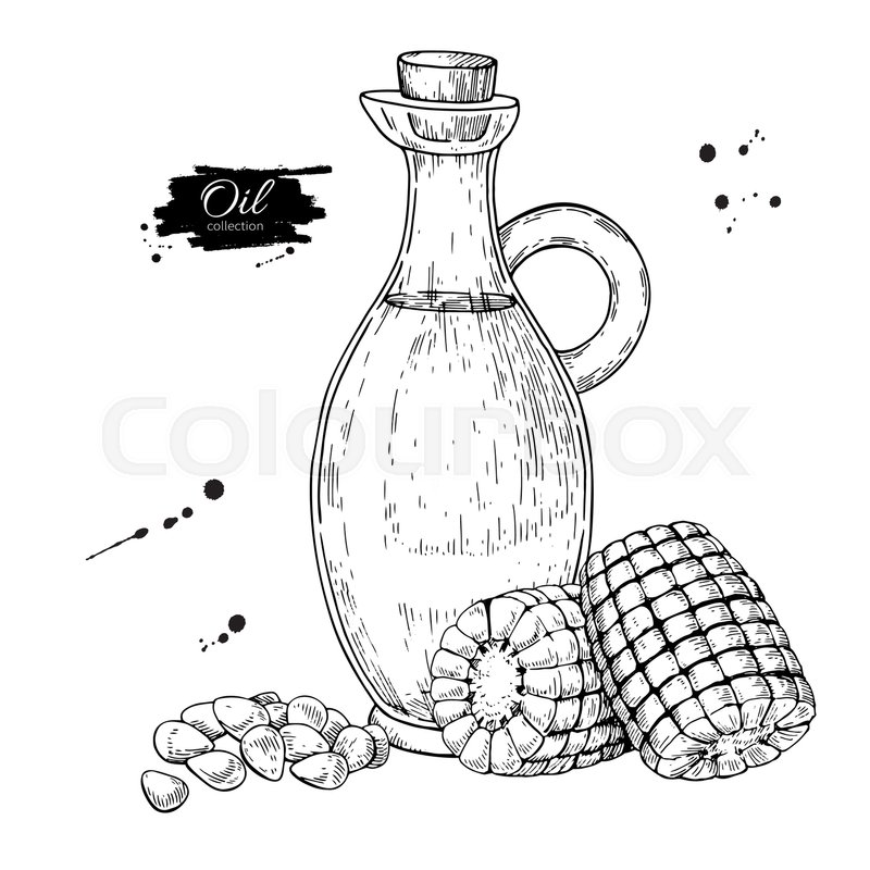 800x800 Bottle Of Corn Cooking Oil. Vector Hand Drawn Illustration. Glass