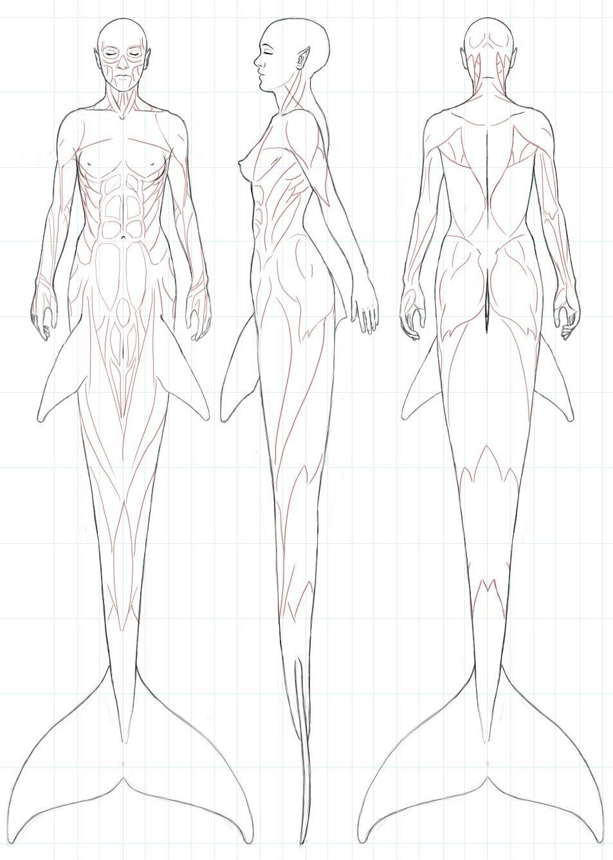 953x1338 Drawing Art Female Draw Underwater Fish Anatomy Creature Tail