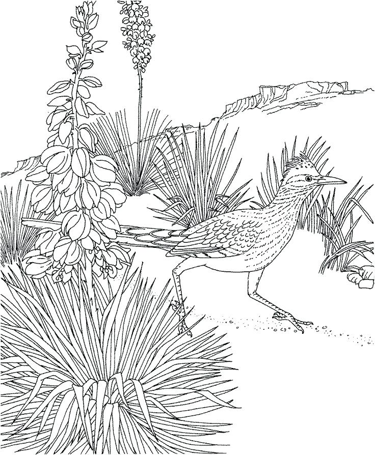 736x894 New Mexico Coloring Pages New Flag Coloring Sheet Trend Page