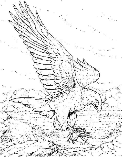 Mexican Eagle Drawing