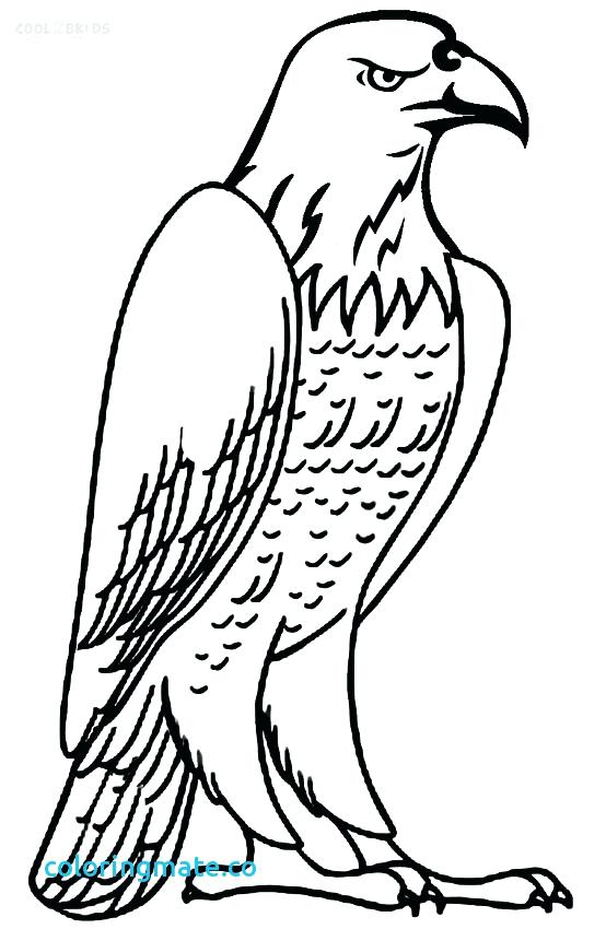 554x850 Eagle Coloring Pages Bald Eagle Head Coloring Pages Bald Eagle