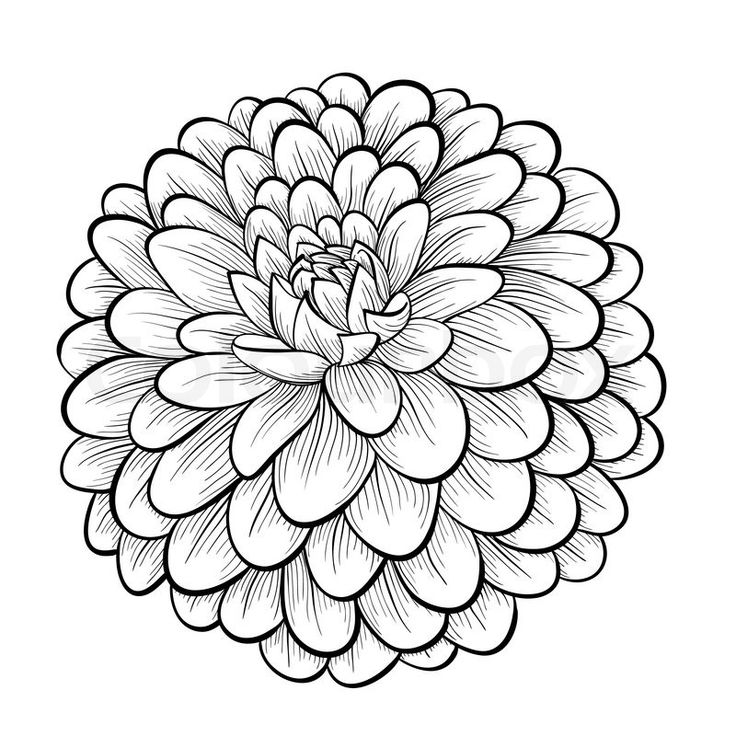 Mexican Flowers Drawing
