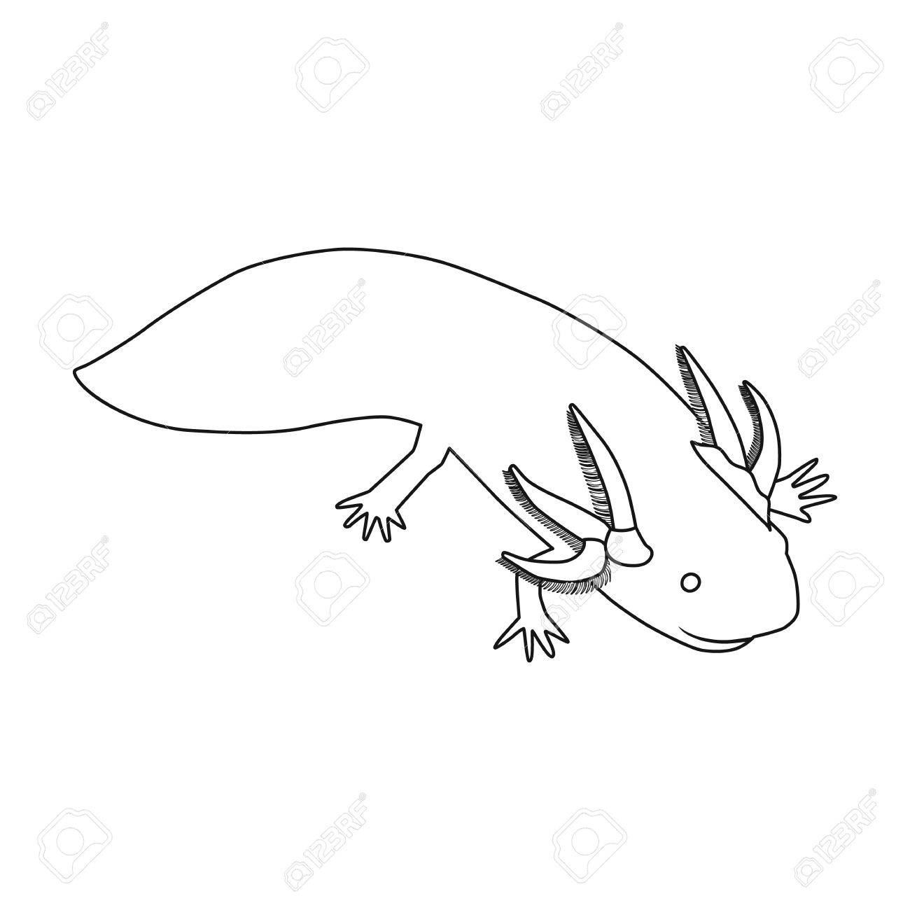 1300x1300 Mexican Axolotl Icon In Outline Style Isolated On White Background