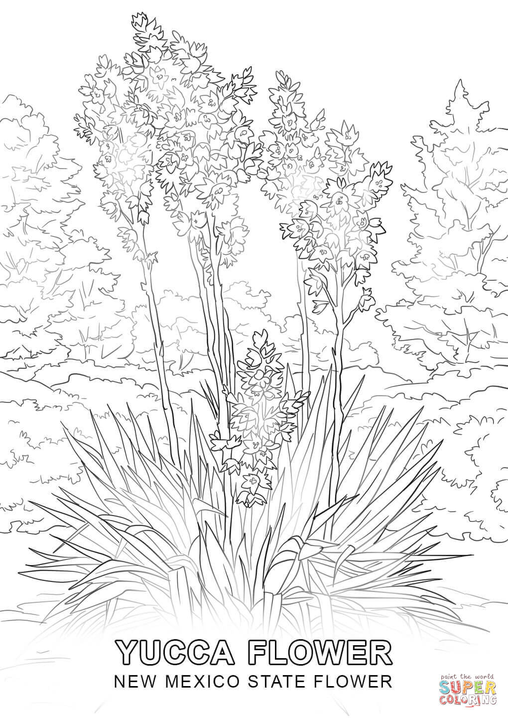 1020x1440 New Mexico State Flower Coloring Page Free Printable Coloring Pages