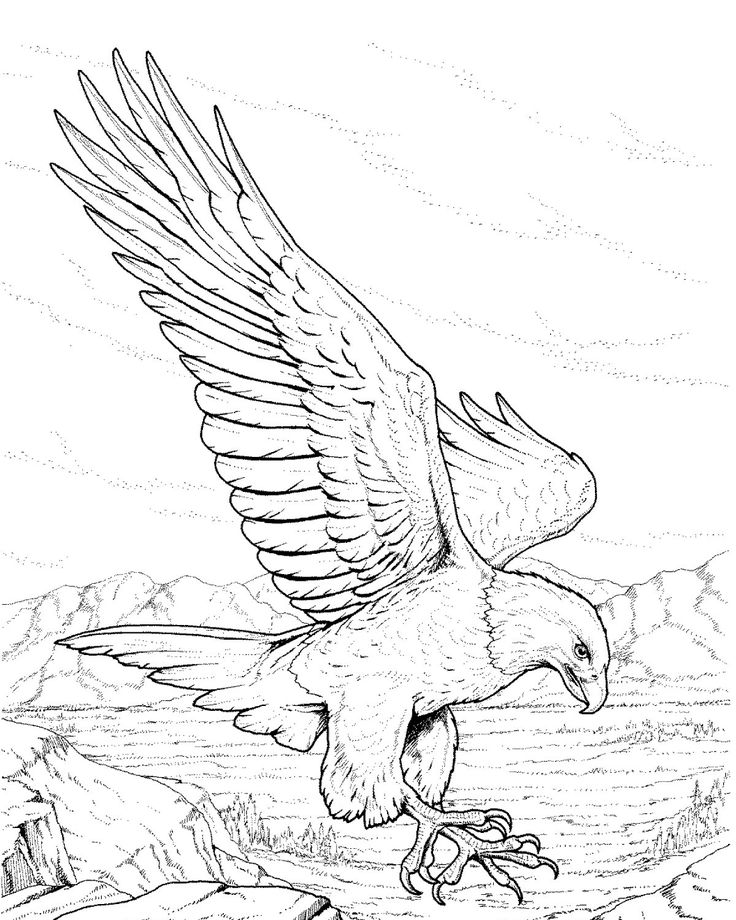 Mexico Eagle Drawing