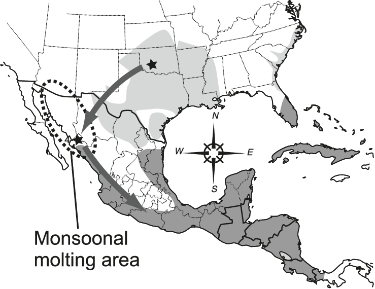 739x570 Map Of Southern United States And Mexico Showing Breeding (Light