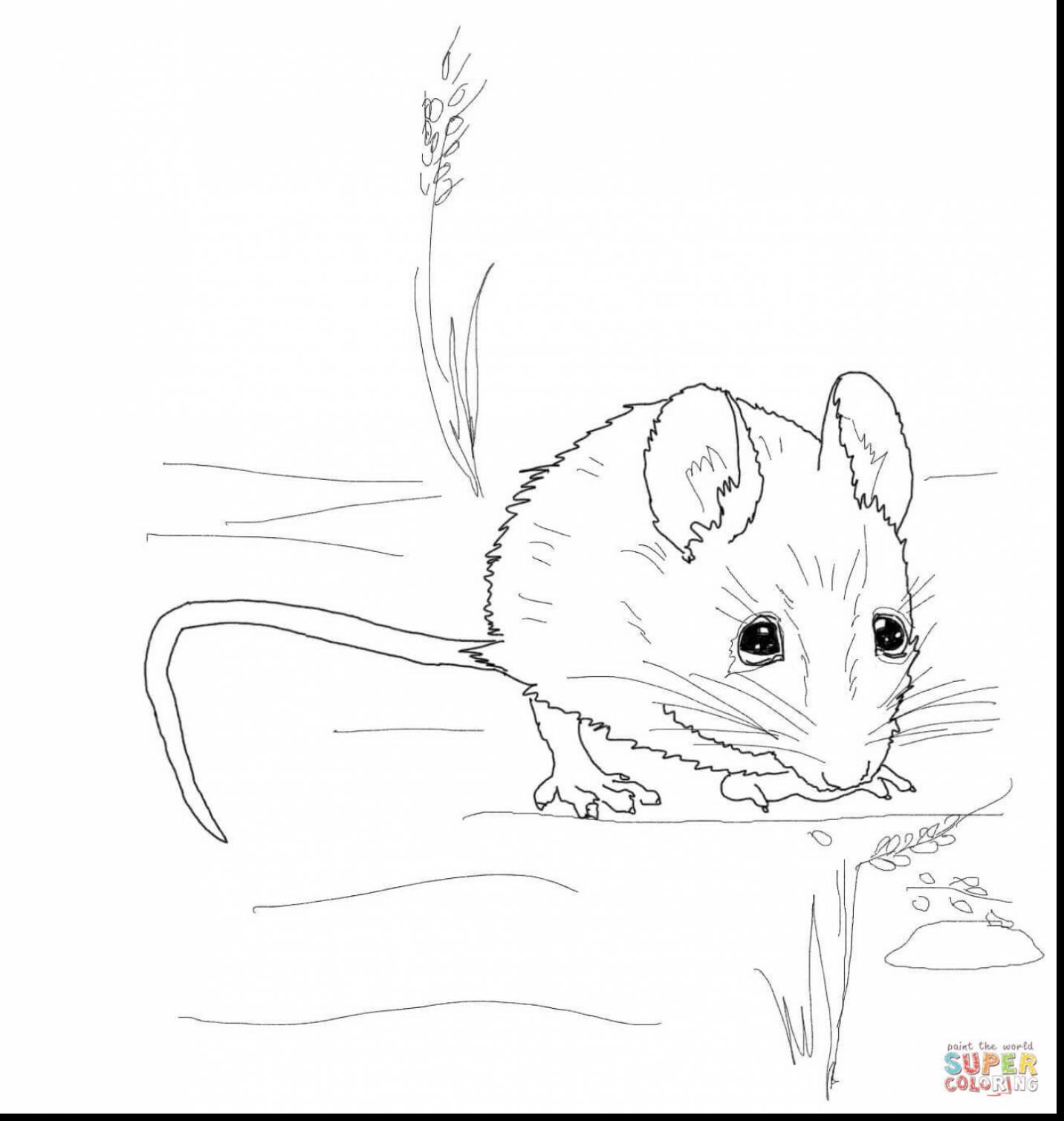 1432x1509 Spectacular Rat Drawing With Mouse Coloring Page